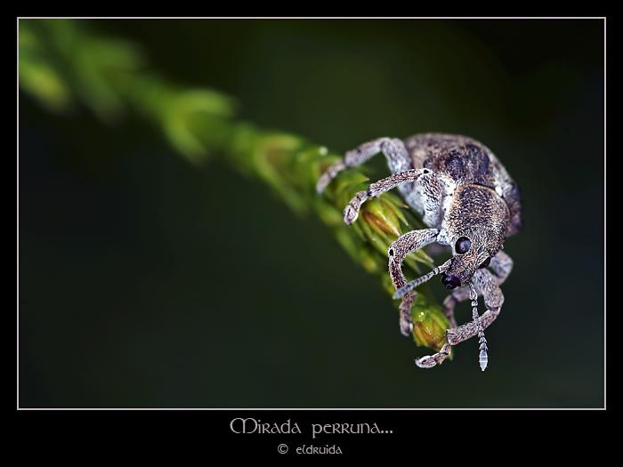 01_gorgojo_web.jpg