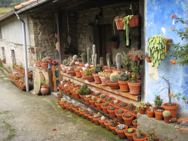 Vuestros cactus invernaderos aire libre terrazas patios - Invernaderos de terraza ...