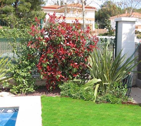 Seto arbusto para cercado hoja perenne 2m altura y resistente for Arboles crecimiento rapido hoja perenne