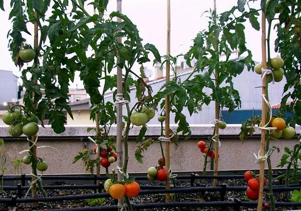 04_tomaquets_2.JPG