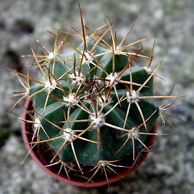 05nov-cactusx3.jpg