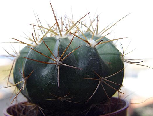 05nov-cactusx4.jpg