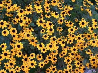 10425823-bright-yellow-echinacea-flower-background.jpg