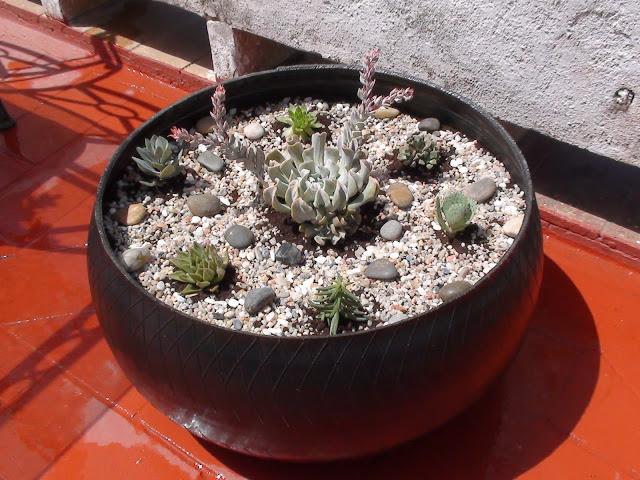 11-plantado.JPG