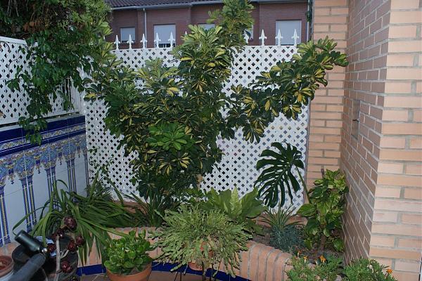 12083d1283338196t-la-terraza-de-marin_gatova-dsc01082.jpg
