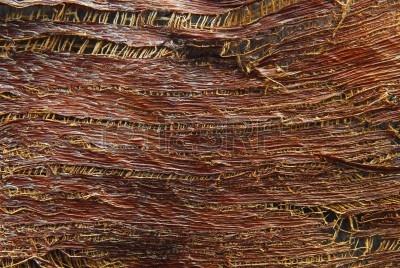 13164210-textura-de-la-corteza-de-los-arboles-de-palma.jpg