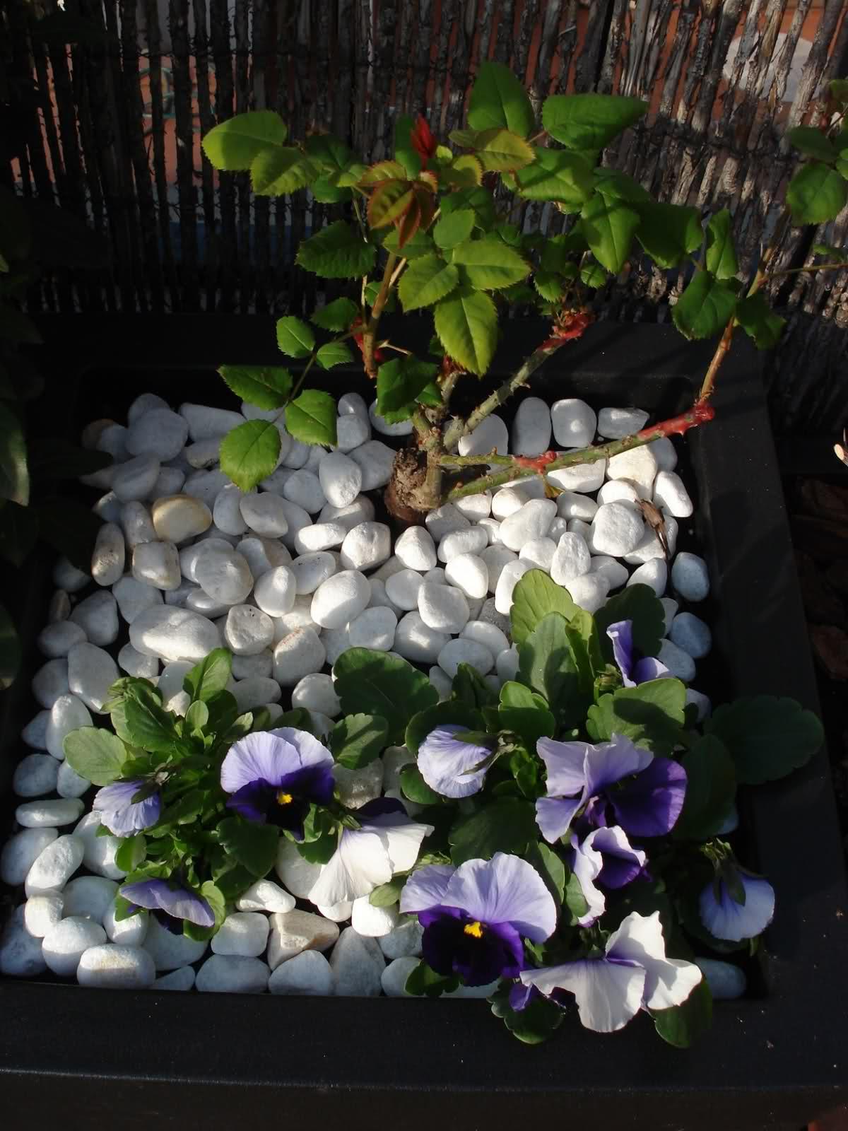 Decorar macetas negras con piedras blancas en la terraza for Decoracion de patios con macetas