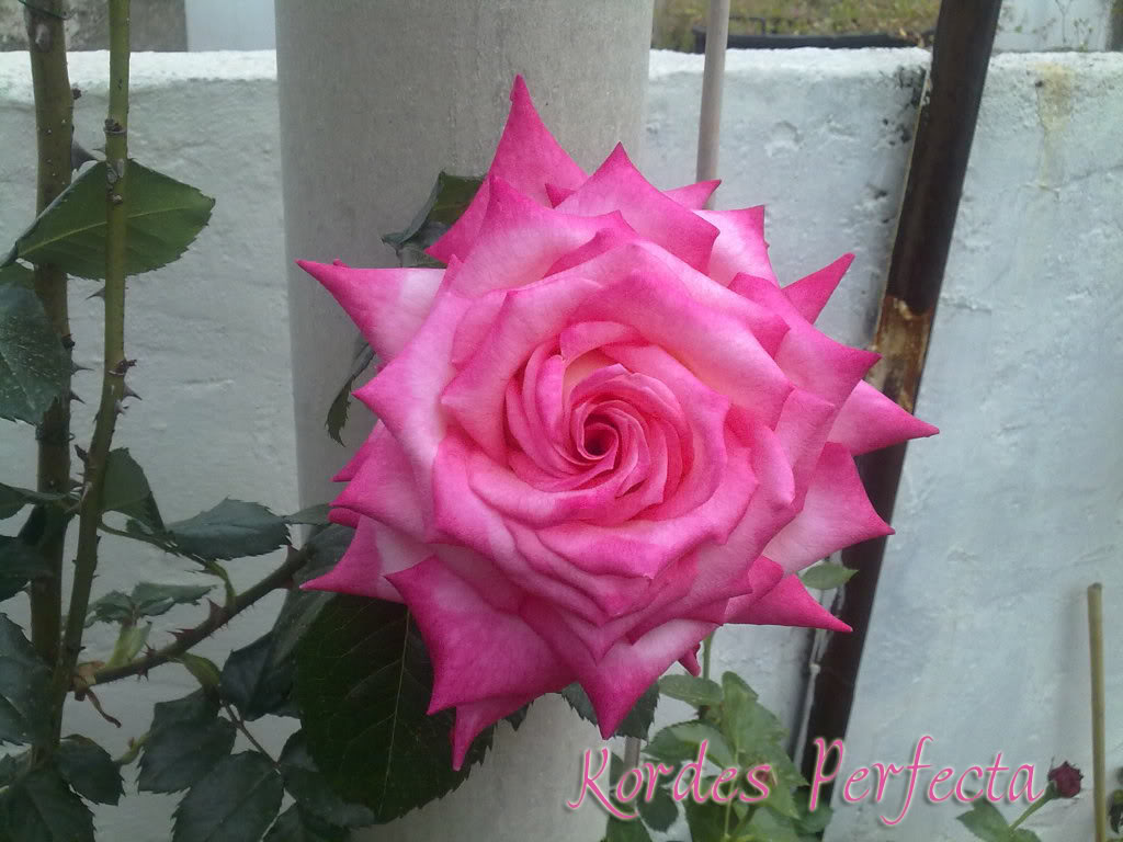150420111412copia.jpg