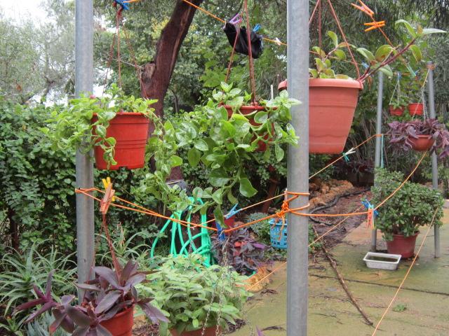 Jardiner a fotos de plantas informaci n trucos el for Jardineria fotos