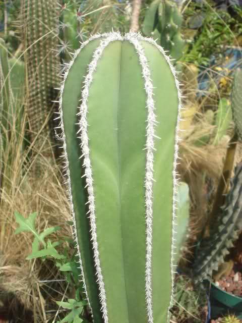 Cactus de metztitl n m xico parte 1 for Vivero feroxcactus