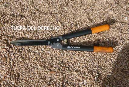 18995d1296756042-poda-de-arbustos-p1060291.jpg