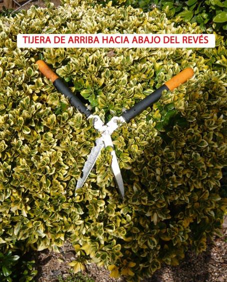 18999d1296756042-poda-de-arbustos-p1060290.jpg