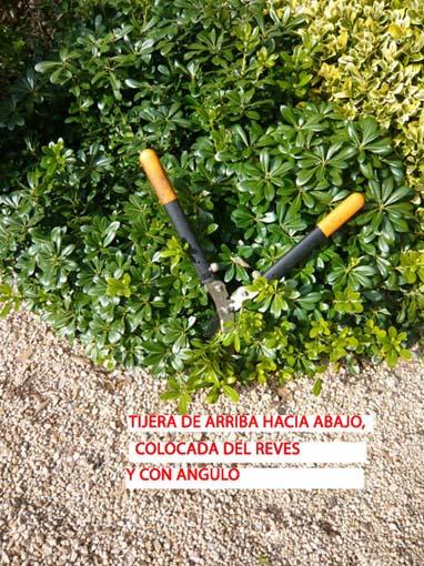 19002d1296756141-poda-de-arbustos-p1060296.jpg