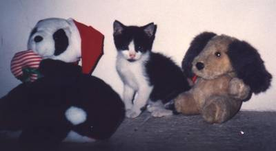 1999-002_Mascotas_Kitty.JPG