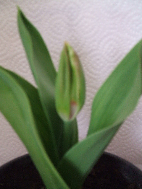2007_1003patio-plantas0053.JPG