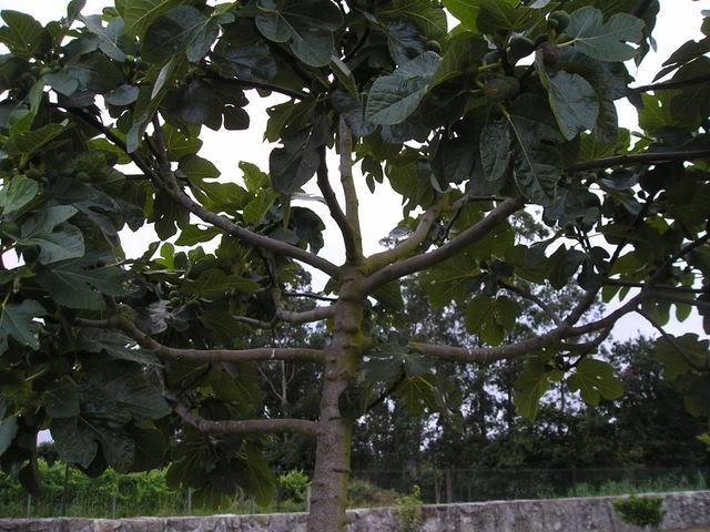 2008-07-08Higuera1.jpg