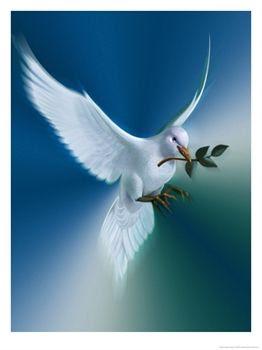 20090310121149-040c0904ll-paloma-de-la-paz-posters.jpg