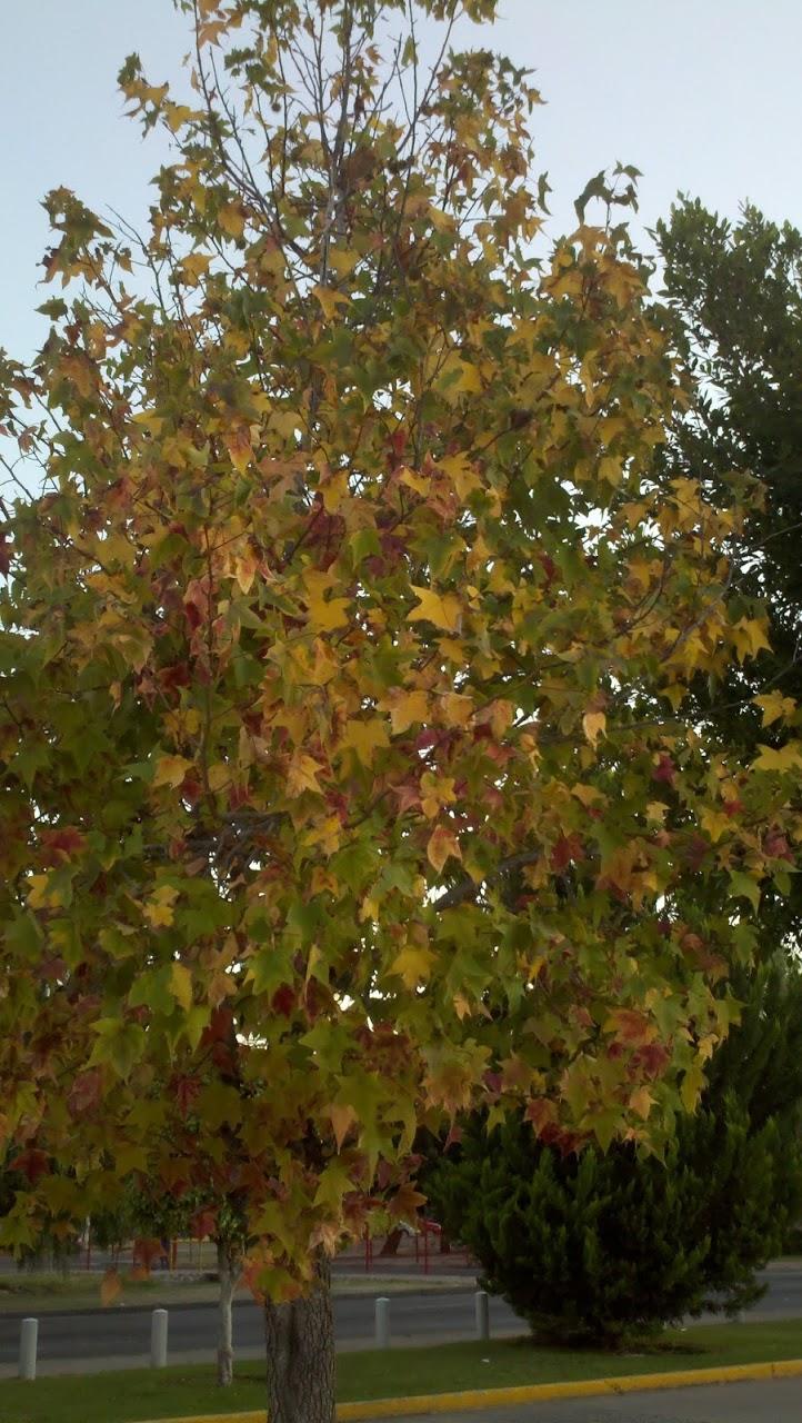 2011-10-26_19-16-41_659.jpg
