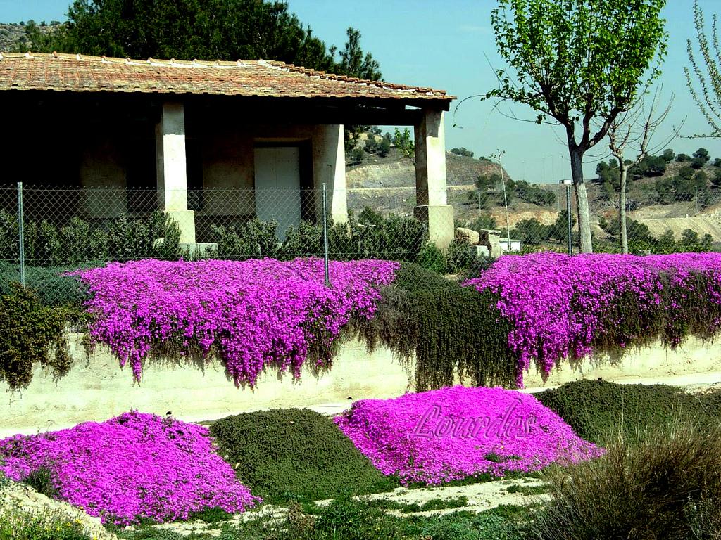Plantas para mi tico en zaragoza sugerencias for Plantas para mi jardin