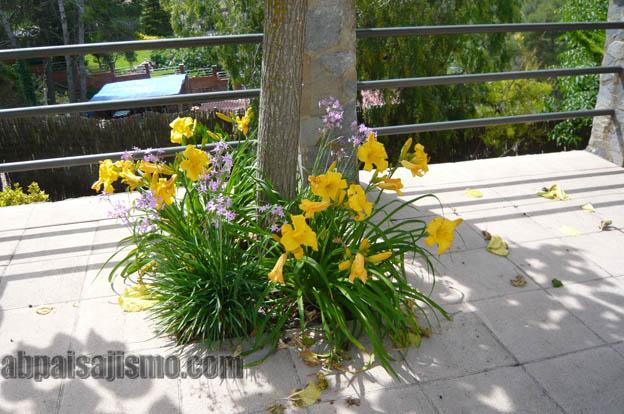 25789d1308576336-remodelacion-de-jardin-bajo-pinos-p1070491.jpg