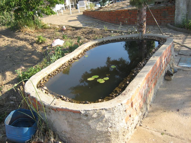Fotos de estanque en la huerta for Como cultivar tilapia en estanques