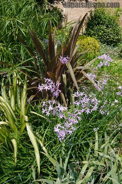 26465d1311353248t-el-jardin-de-la-parroquia-p1070649formios-thulbaghias.jpg