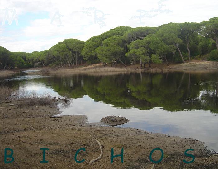 Crear un estanque artificial sin lona con arcilla fotos for Lona para estanques