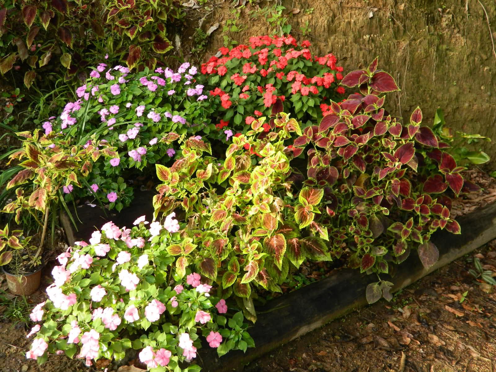 Rbol o arbusto grande de crecimiento r pido para dar for Arboles de jardin de crecimiento rapido