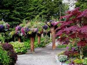 333177_Glacier%20Gardens%20Rainforest%20Adventure.jpg
