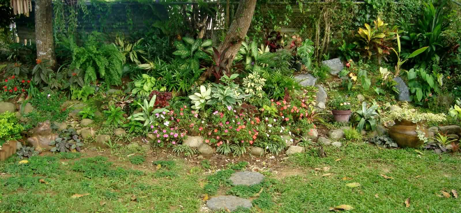 Fotos de mi jard n tropical for Jardines de hogar