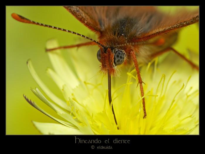 47_mariposa.jpg