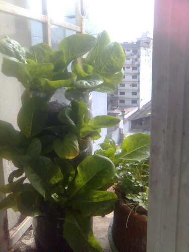 Reciclaje de botellas de pl stico para jardiner a plantas - Reciclaje jardineria y decoracion ...
