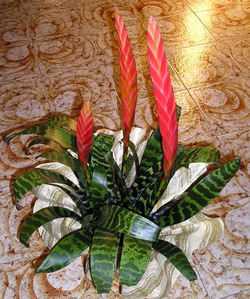 502px-Vriesia_Bromeliaceae.png