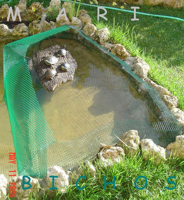 Estanque de mari bichos for Estanque tortugas