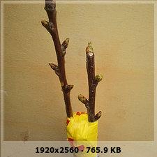 61049db187b412a93f6c988e61fcbaebo.jpg