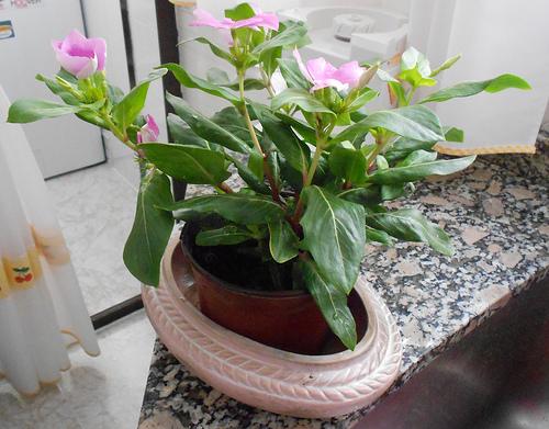 Si riegas salen flores - 3 2