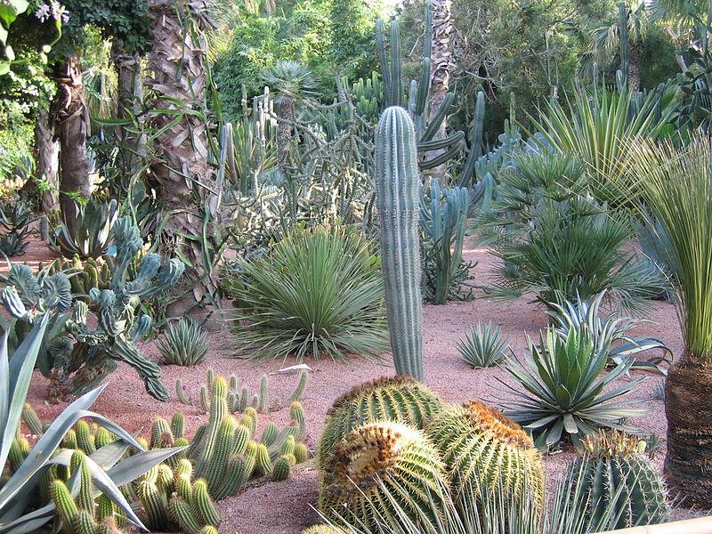 800px-Cactii_Majorel_Gardens.JPG