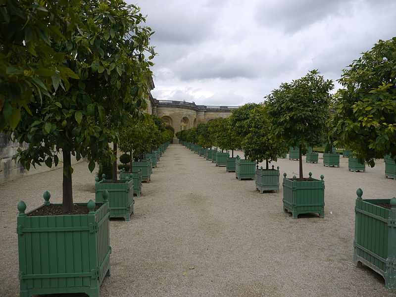 800px-Orangerie_de_Versailles_-_P1180619.jpg