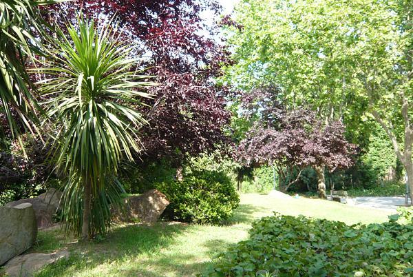 9745d1277467929t-jardines-con-diseno-p1040759.jpg