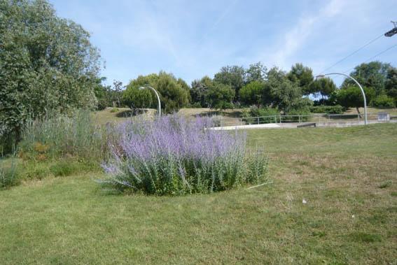 9800d1277633262-un-paseo-por-jardines-de-barcelona-p1040694.jpg