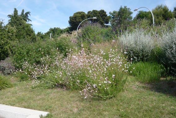 9802d1277633262-un-paseo-por-jardines-de-barcelona-p1040699.jpg