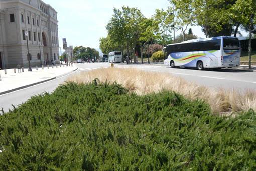 9811d1277633593-un-paseo-por-jardines-de-barcelona-p1040660stypas-romeros.jpg