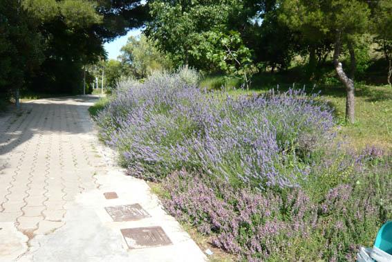 9819d1277635434-un-paseo-por-jardines-de-barcelona-p1040711.jpg