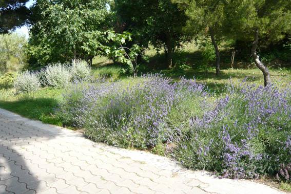 9820d1277635434-un-paseo-por-jardines-de-barcelona-p1040713.jpg