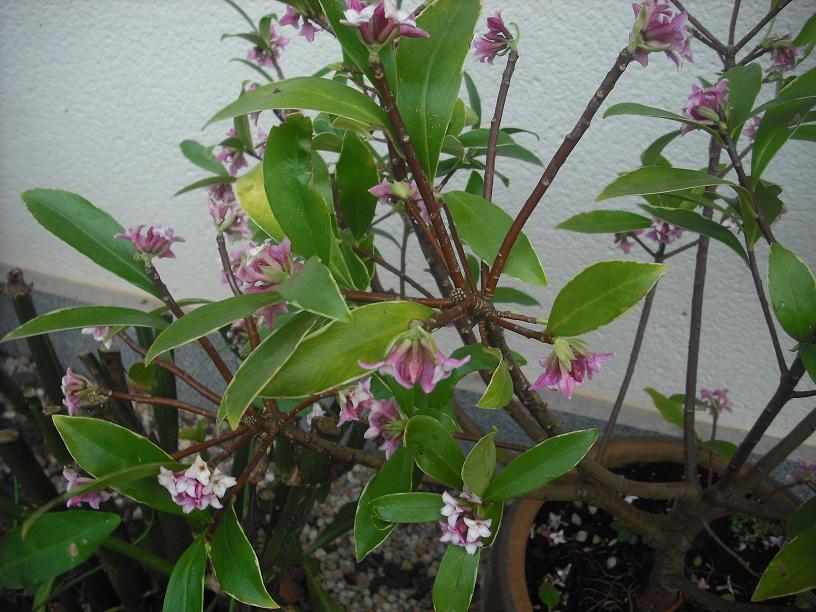 Este arriate ha cambiado muchas veces de plantas - Arriate plantas ...