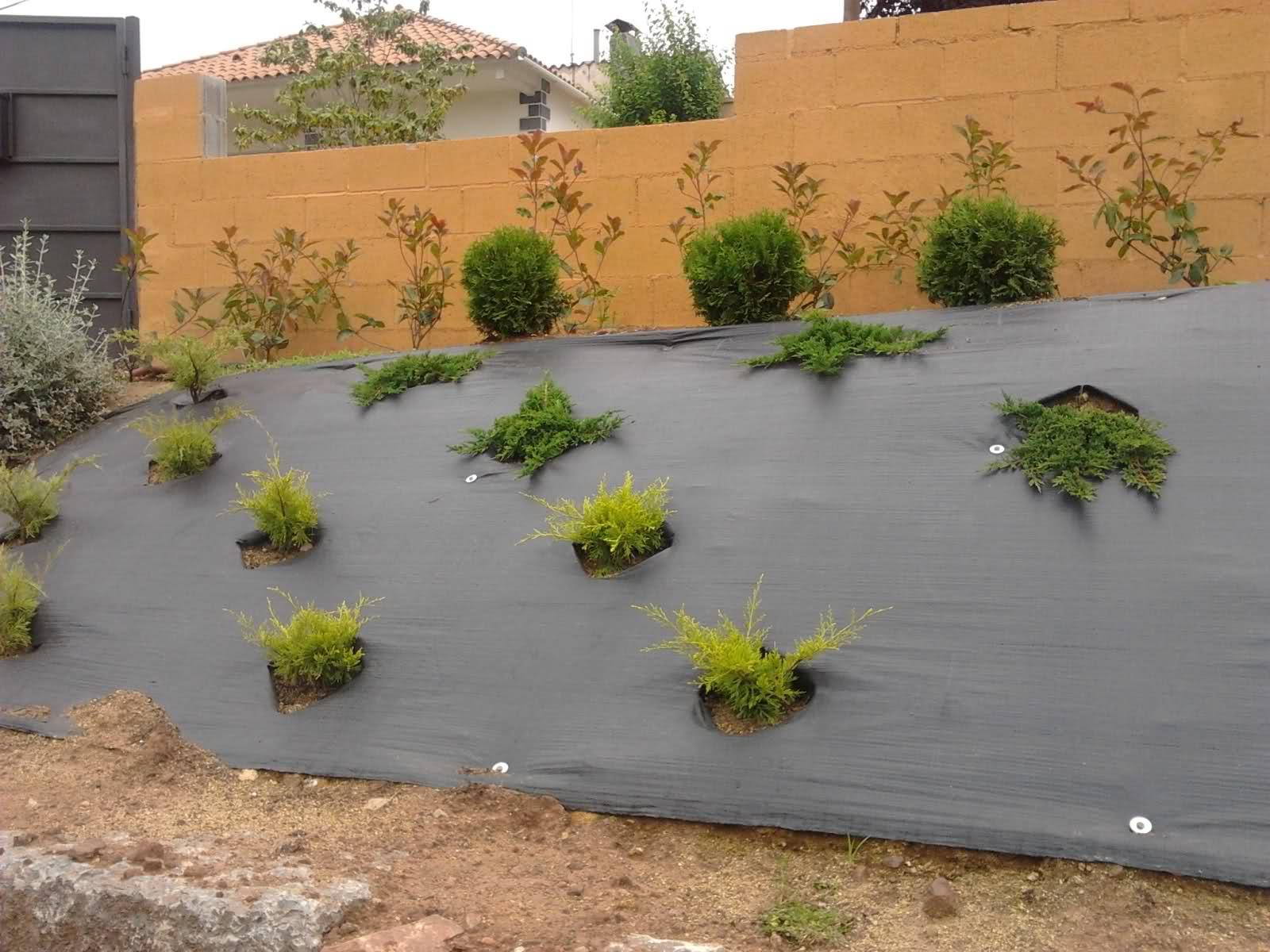 Talud y plantas tapizantes recomendaciones p gina 4 for Infos jardin