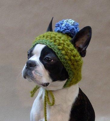 abrigo_para_perros.jpg