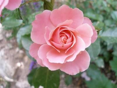 abril_2006_036_Small_.jpg