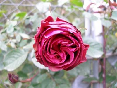 abril_2006_095_Small_.jpg