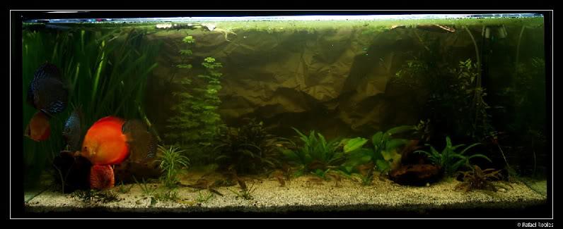 acuario-4-1.jpg